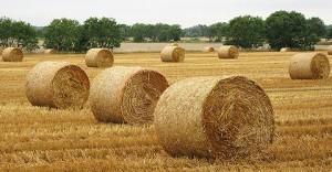 Biomass to Bio Oil